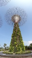 Super Tree. Garden by the bay