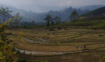 Rice fields near Lai Chau