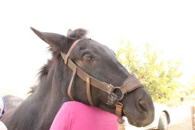 horse-prop