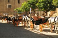 Horse carriges outside Seville cathedral