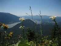 Flowered Gorge