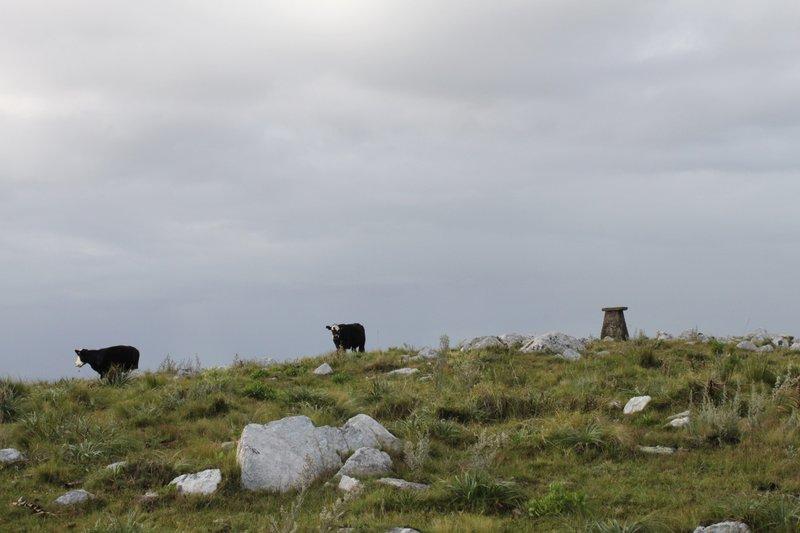 catedral peak cow