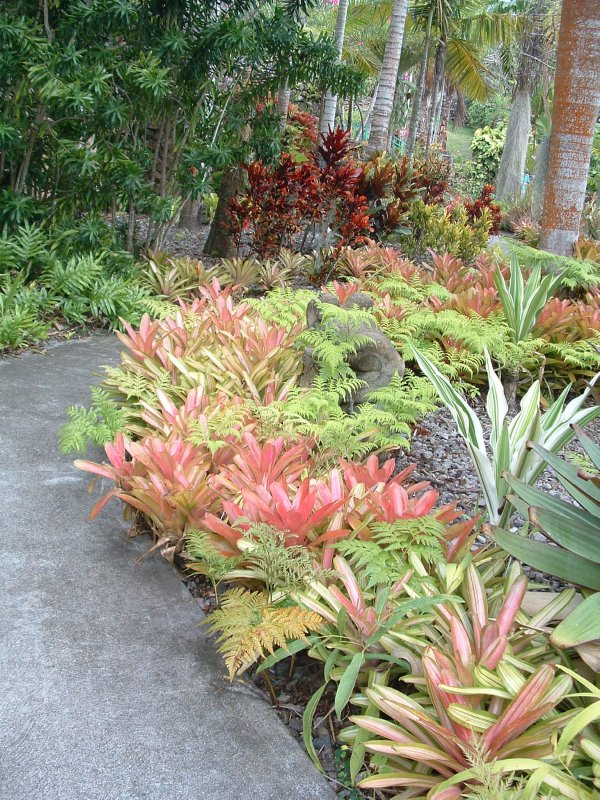 Botanical Gardens, Nevis, West Indies, May 2011 (37)