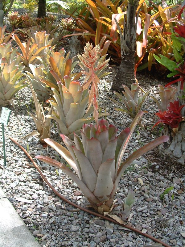 Botanical Gardens, Nevis, West Indies, May 2011 (40)