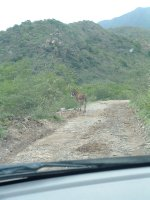 Driving around the island, Nevis, West Indies, May 2011 (10)
