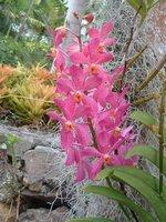 Botanical Gardens, Nevis, West Indies, May 2011 (36)