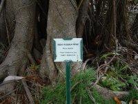 Botanical Gardens, Nevis, West Indies, May 2011 (9)