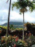 Botanical Gardens, Nevis, West Indies, May 2011 (32)