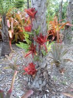 Botanical Gardens, Nevis, West Indies, May 2011 (41)