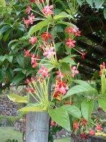 Botanical Gardens, Nevis, West Indies, May 2011 (47)