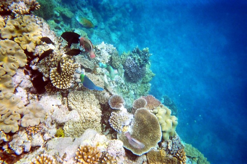 Moore Reef, Great Barrier Reef, Queensland
