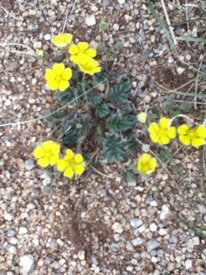 Light relief in the desert