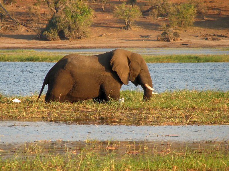 Male elephant wandering around