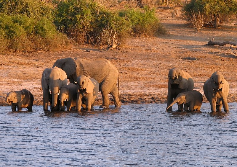 Elephants afternoon refreshing