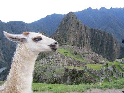 Alpaca Machu Picchu