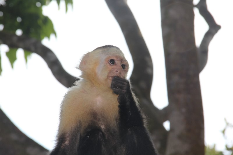 Neighborhood monkeys