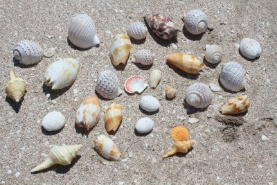 Shell collection on Eighty Mile Beach