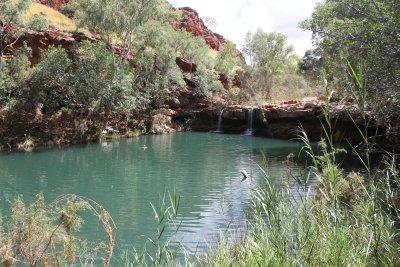 Fern Pool, Dales Gorge, Karijini NP