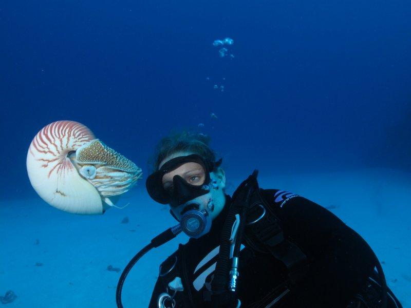 Admiring Nautilus