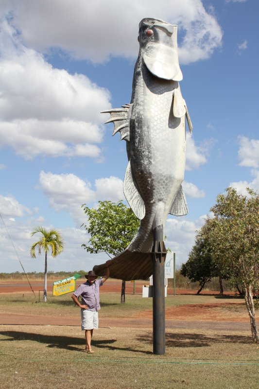 Barramundi in Normanton