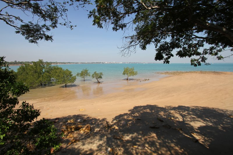 Views of Darwin through the mangroves at East Point