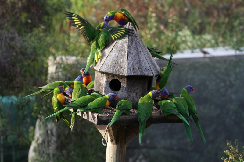 Lorikeet feeder