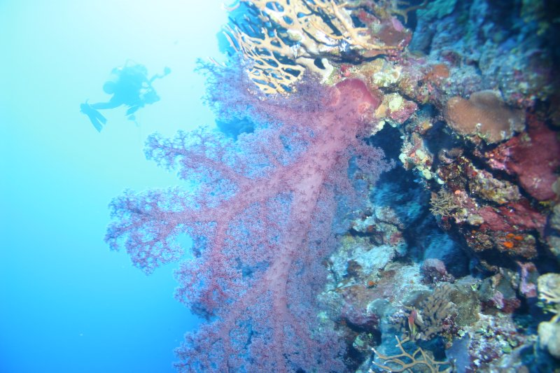 Lovely soft corals at Osprey Reef
