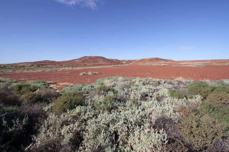 Sturt Stony Desert
