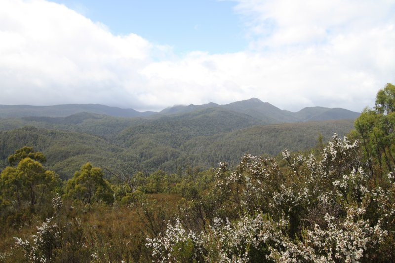 Tarkine wilderness
