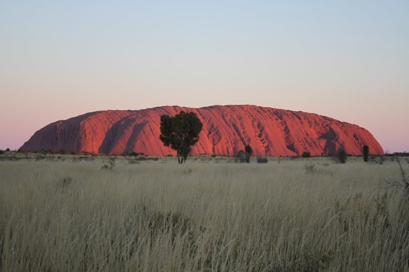 Ayers Rock and white spinifex grass after sunset