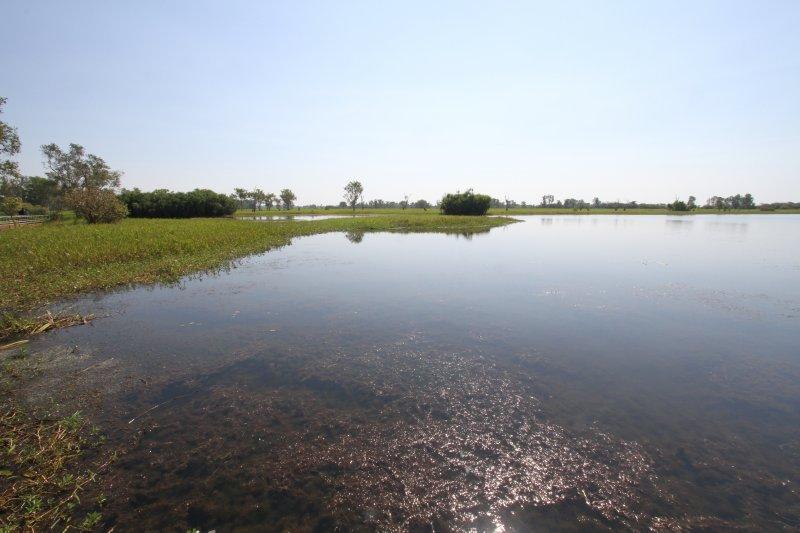 Yellow Waters wetlands