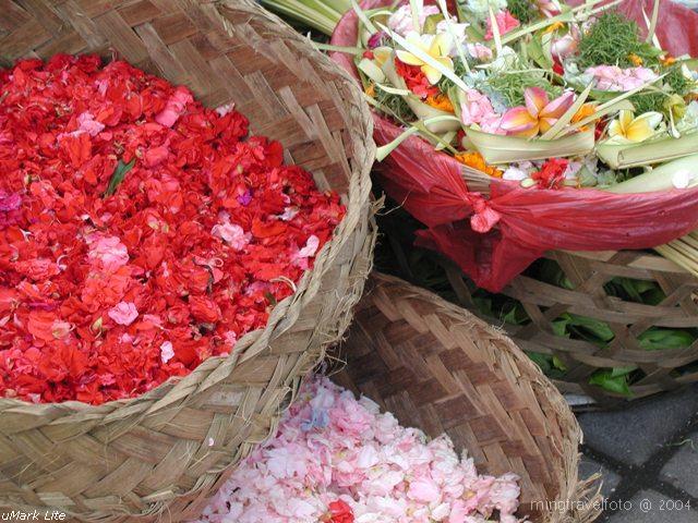 Colors of Bali