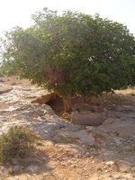 Tobruk__Lybia_015.jpg
