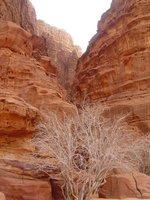 Wadi_Rum__..7_-_047.jpg
