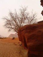 Wadi_Rum__..7_-_051.jpg