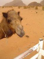 Wadi_Rum__..7_-_120.jpg