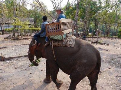 Elephants_1.jpg