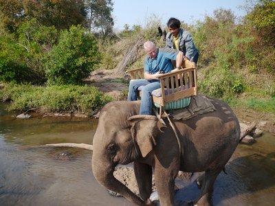 Elephants_2.jpg