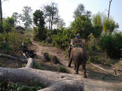 Elephants_4.jpg