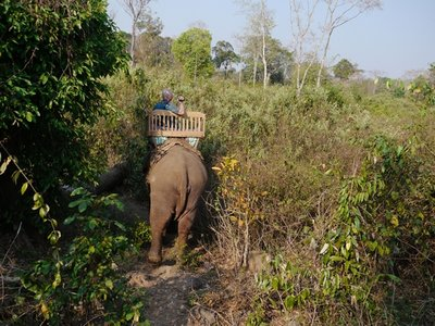 Elephants_5.jpg