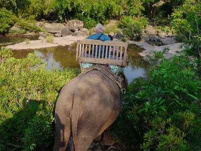 Elephants_6.jpg