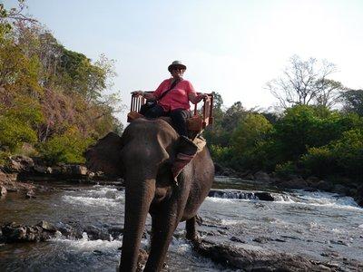 Elephants_7.jpg