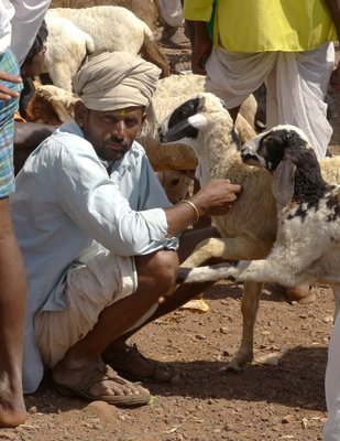 Goat_Market.jpg