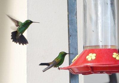 Humming_birds.jpg