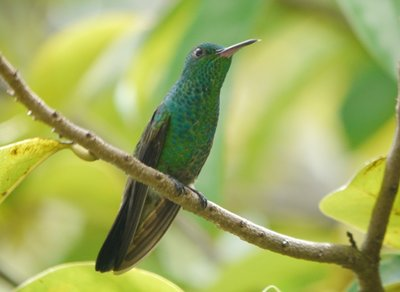 Hummingbird_Gallery_1.jpg