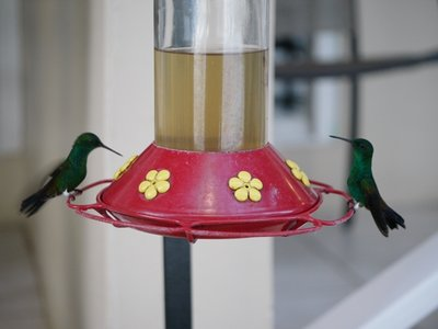 Hummingbirds_1.jpg