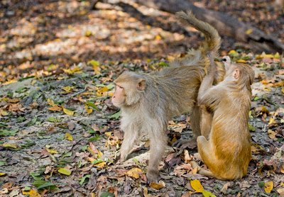 Monkeys_1.jpg