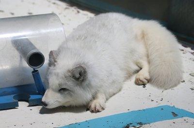 Polar_2.jpg