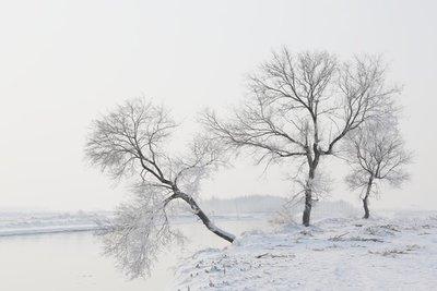Rimed_Trees_2.jpg