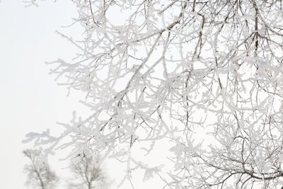 Rimed_Trees_3.jpg